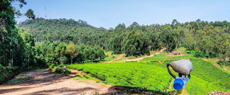 Ruanda Rundreisen - WORLD INSIGHT Erlebnisreisen